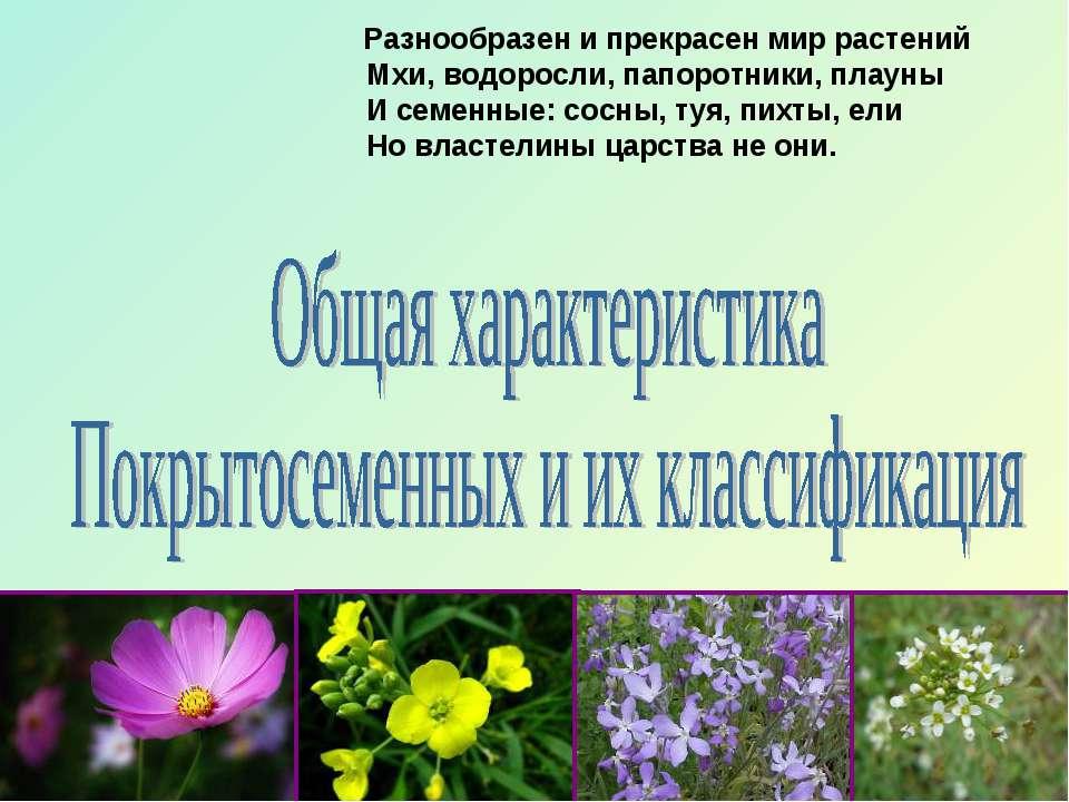 Разнообразен и прекрасен мир растений Мхи, водоросли, папоротники, плауны И с...