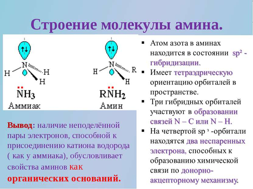 Строение молекулы амина. Вывод: наличие неподелённой пары электронов, способн...