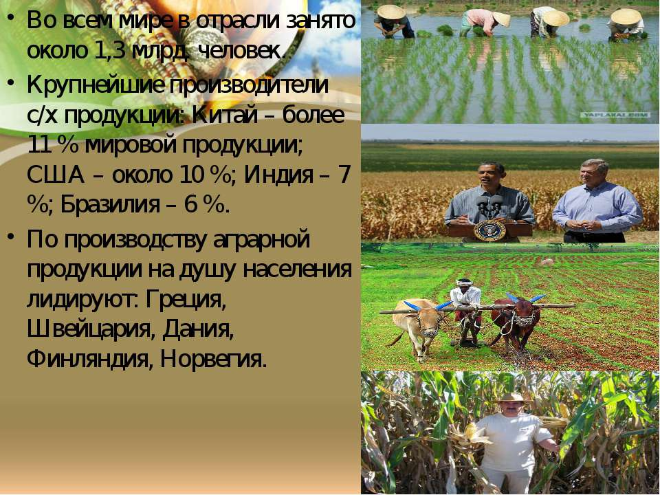 Типы с/х Плужное и матыжное земледелие Пастбищное животноводство Кочеве ското...