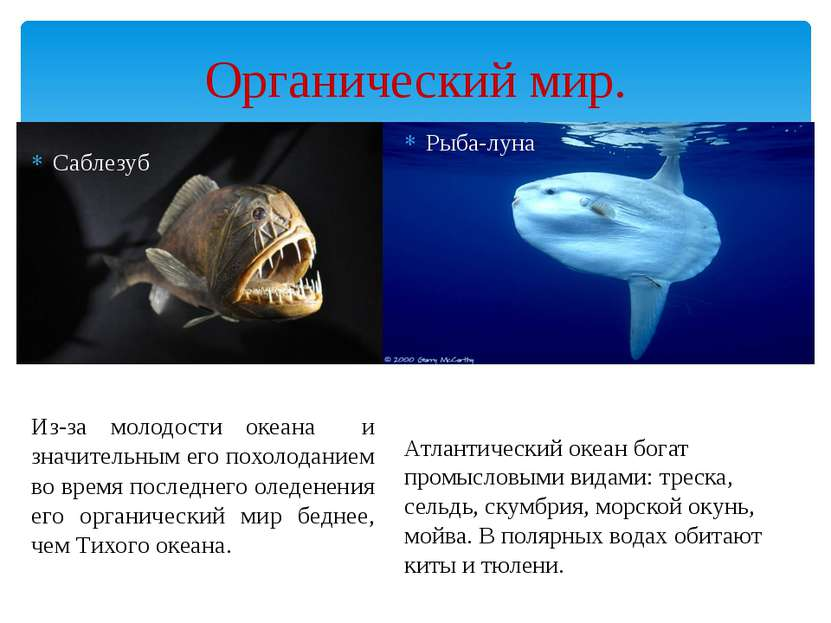 Органический мир. Саблезуб Из-за молодости океана и значительным его похолода...