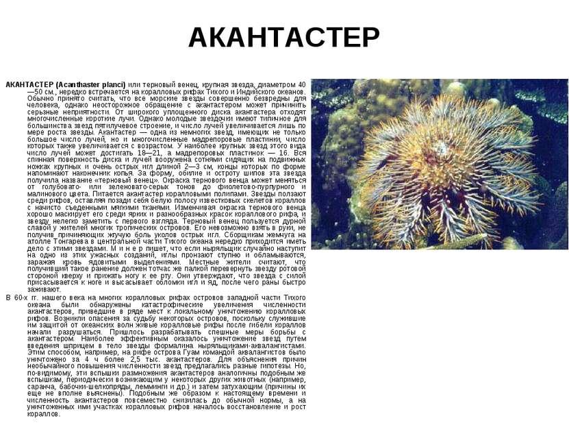 АКАНТАСТЕР АКАНТАСТЕР (Acanthaster planci) или терновый венец, крупная звезда...