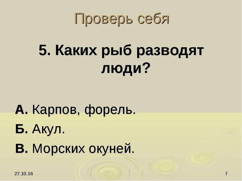 * * Проверь себя 5. Каких рыб разводят люди? А. Карпов, форель. Б. Акул. В. М...