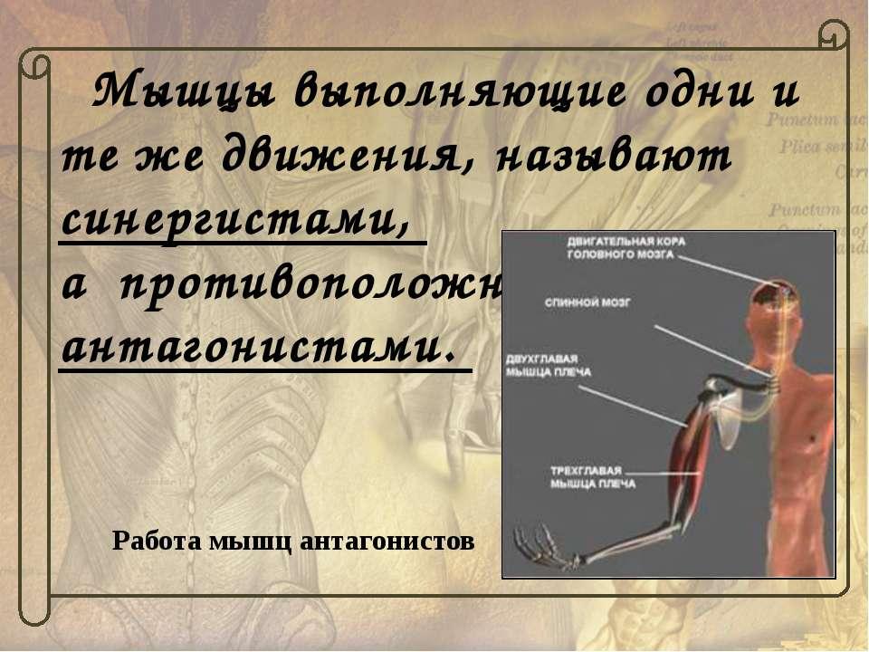 Мышцы в живом организме никогда, даже при покое, не бывают полностью расслабл...