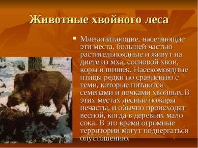Животные хвойного леса Млекопитающие, населяющие эти места, большей частью ра...