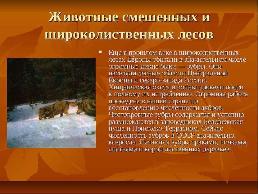 Животные смешенных и широколиственных лесов Еще в прошлом веке в широколистве...