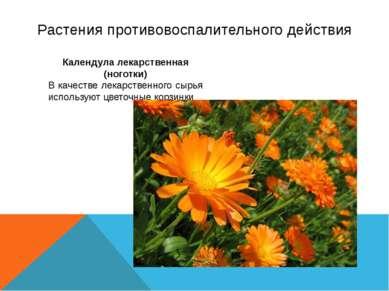 Растения противовоспалительного действия Календула лекарственная (ноготки) В ...