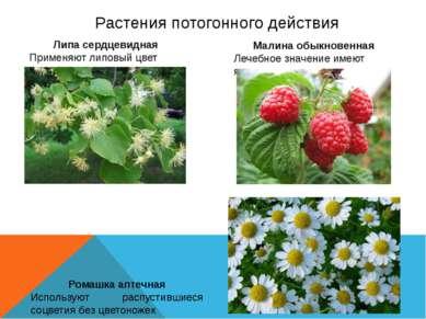 Растения потогонного действия Липа сердцевидная Применяют липовый цвет Малина...