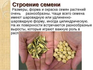 Строение семени Размеры, форма и окраска семян растений очень разнообразны. Ч...