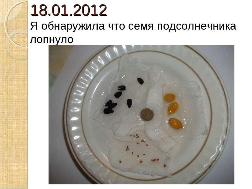 18.01.2012 Я обнаружила что семя подсолнечника лопнуло