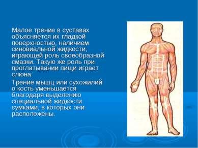 Малое трение в суставах объясняется их гладкой поверхностью, наличием синовиа...