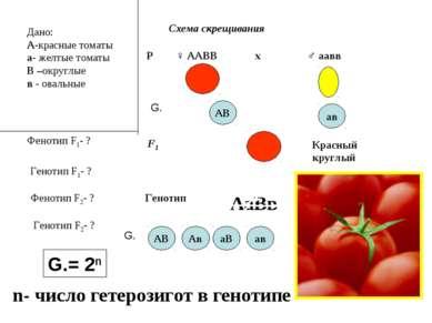 Дано: А-красные томаты а- желтые томаты В –округлые в - овальные Фенотип F1- ...