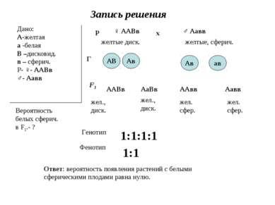 Запись решения Дано: А-желтая а -белая В –дисковид. n – сферич. Р- ♀- ААВв ♂-...