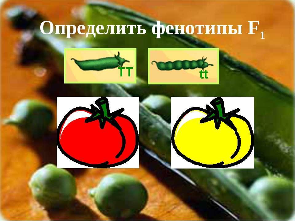 ТТ tt Определить фенотипы F1 СС сс