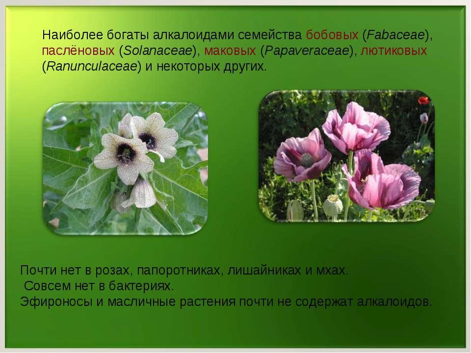 Наиболее богаты алкалоидами семейства бобовых (Fabaceae), паслёновых (Solanac...