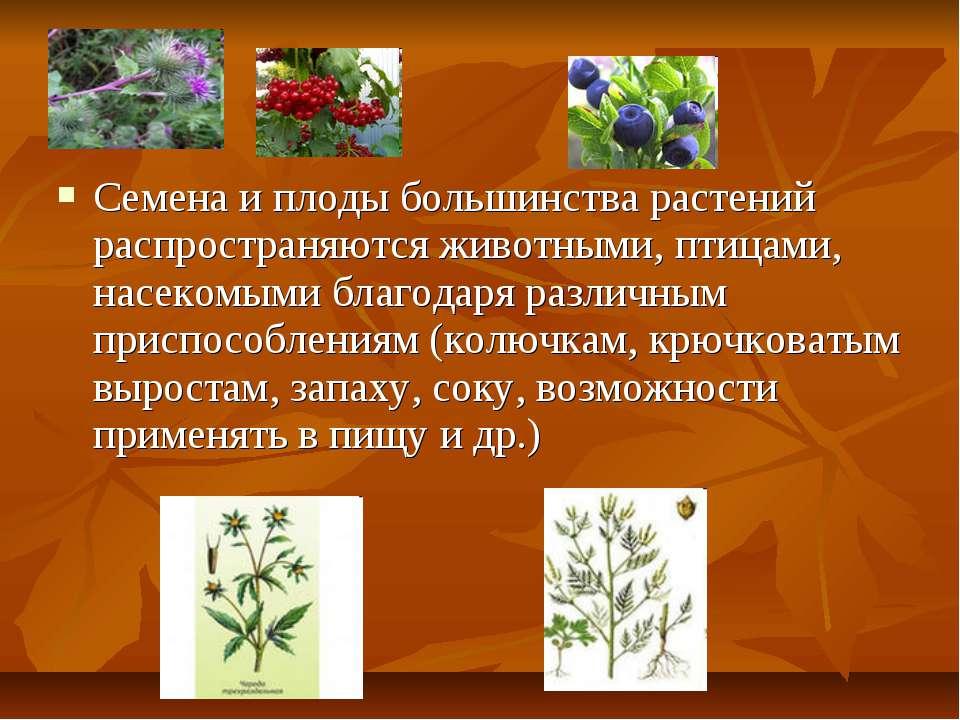 Семена и плоды большинства растений распространяются животными, птицами, насе...