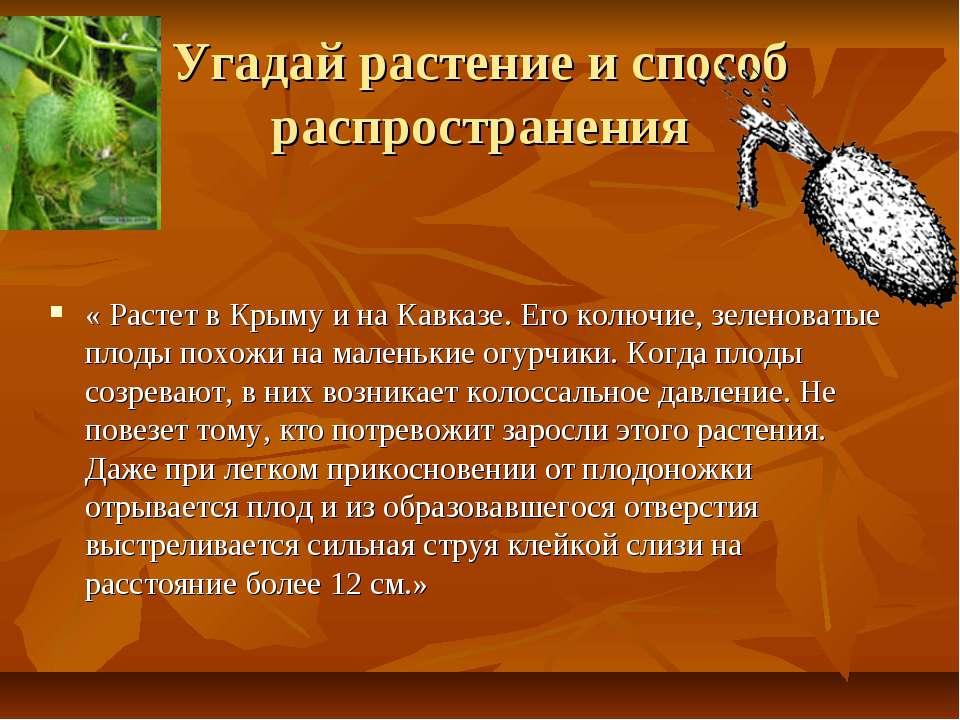 Угадай растение и способ распространения « Растет в Крыму и на Кавказе. Его к...