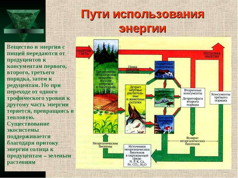 Пути использования энергии Вещество и энергия с пищей передаются от продуцент...