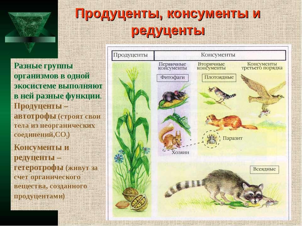 Продуценты, консументы и редуценты Разные группы организмов в одной экосистем...