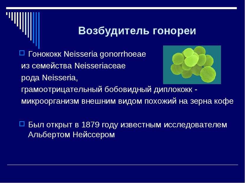 Возбудитель гонореи Гонококк Neisseria gonorrhoeae из семейства Neisseriaceae...