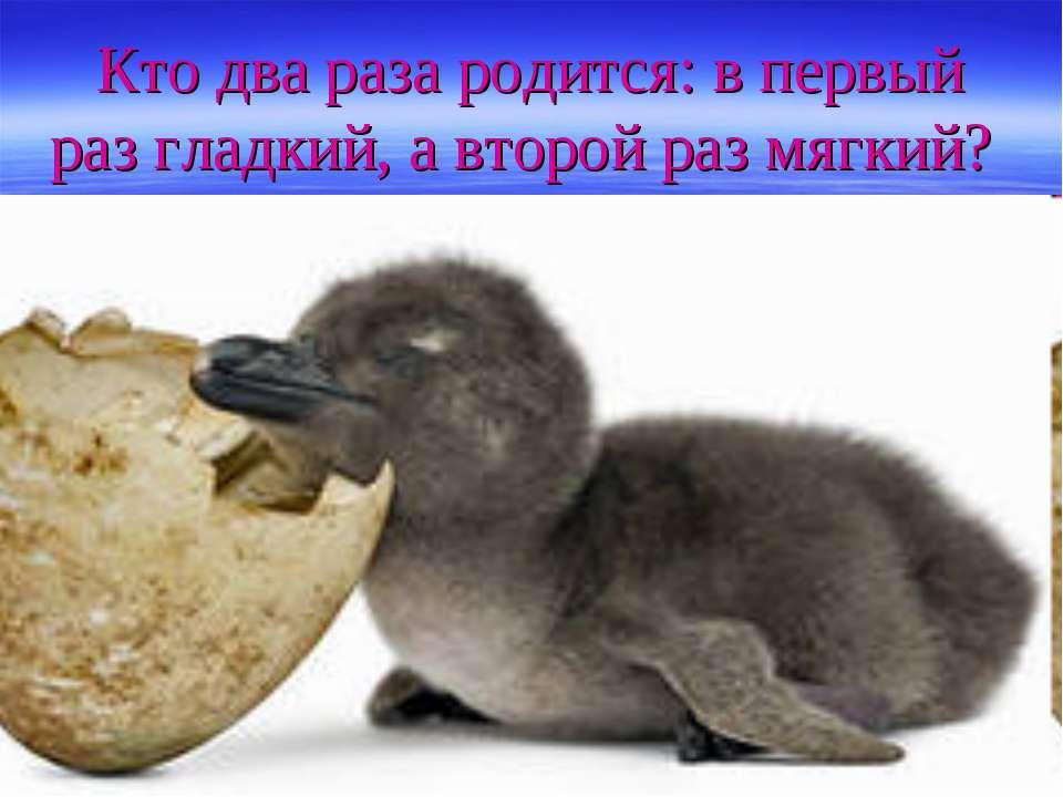 Кто два раза родится: в первый раз гладкий, а второй раз мягкий?