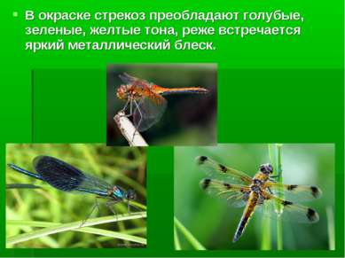 В окраске стрекоз преобладают голубые, зеленые, желтые тона, реже встречается...