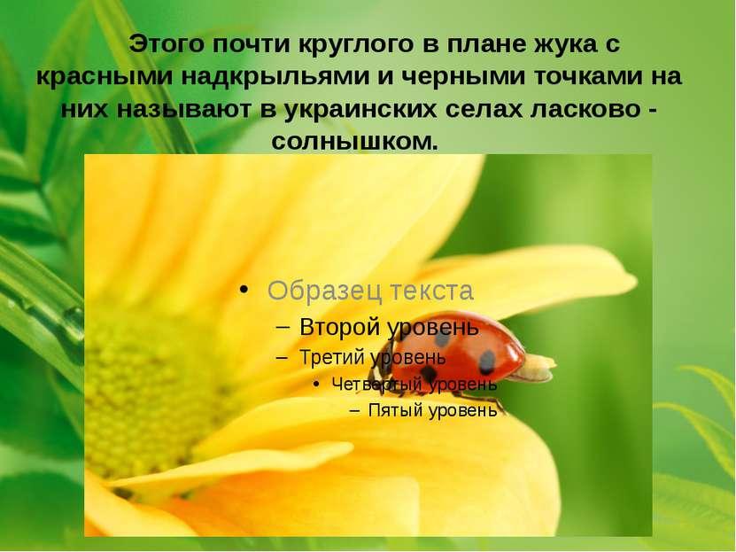 Этого почти круглого в плане жука с красными надкрыльями и черными точками на...