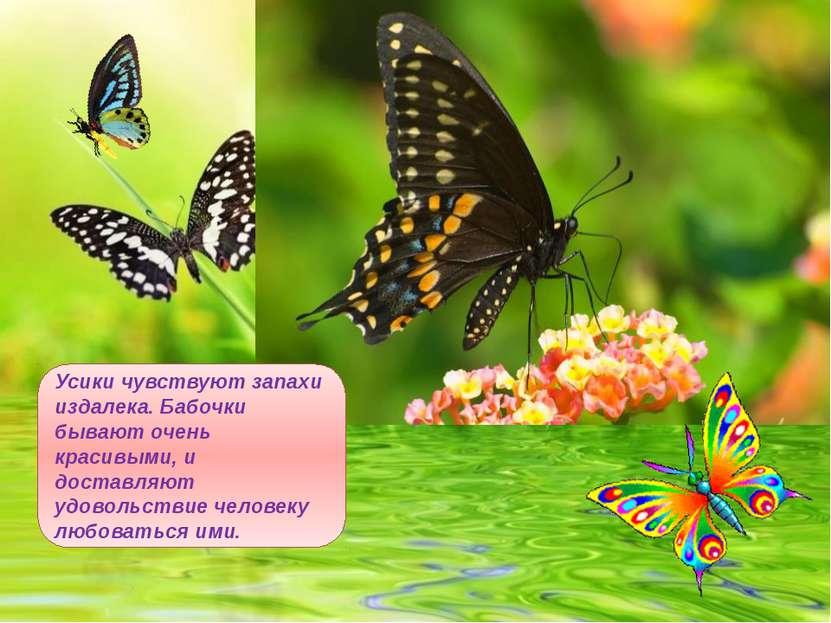 Усики чувствуют запахи издалека. Бабочки бывают очень красивыми, и доставляют...