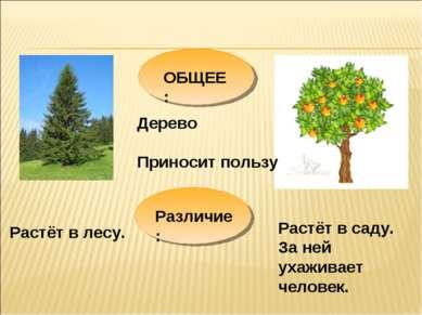 ОБЩЕЕ: Дерево Приносит пользу Различие: Растёт в саду. За ней ухаживает челов...