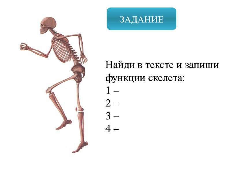 ЗАДАНИЕ Найди в тексте и запиши функции скелета: 1 – 2 – 3 – 4 – Значение: Оп...