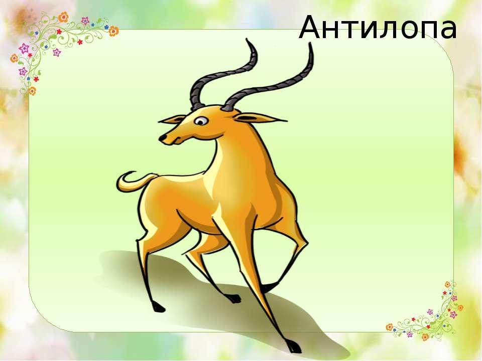 Антилопа