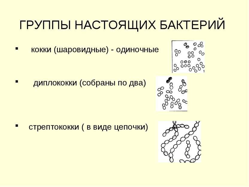 ГРУППЫ НАСТОЯЩИХ БАКТЕРИЙ кокки (шаровидные) - одиночные диплококки (собраны ...