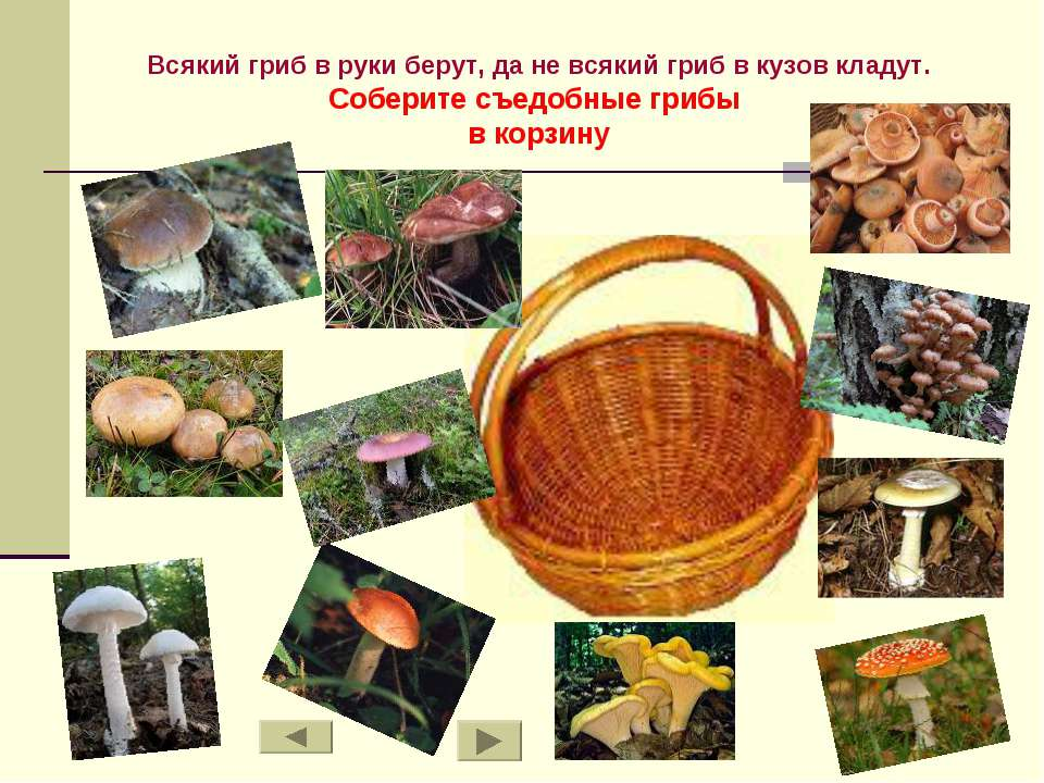 Всякий гриб в руки берут, да не всякий гриб в кузов кладут. Соберите съедобны...