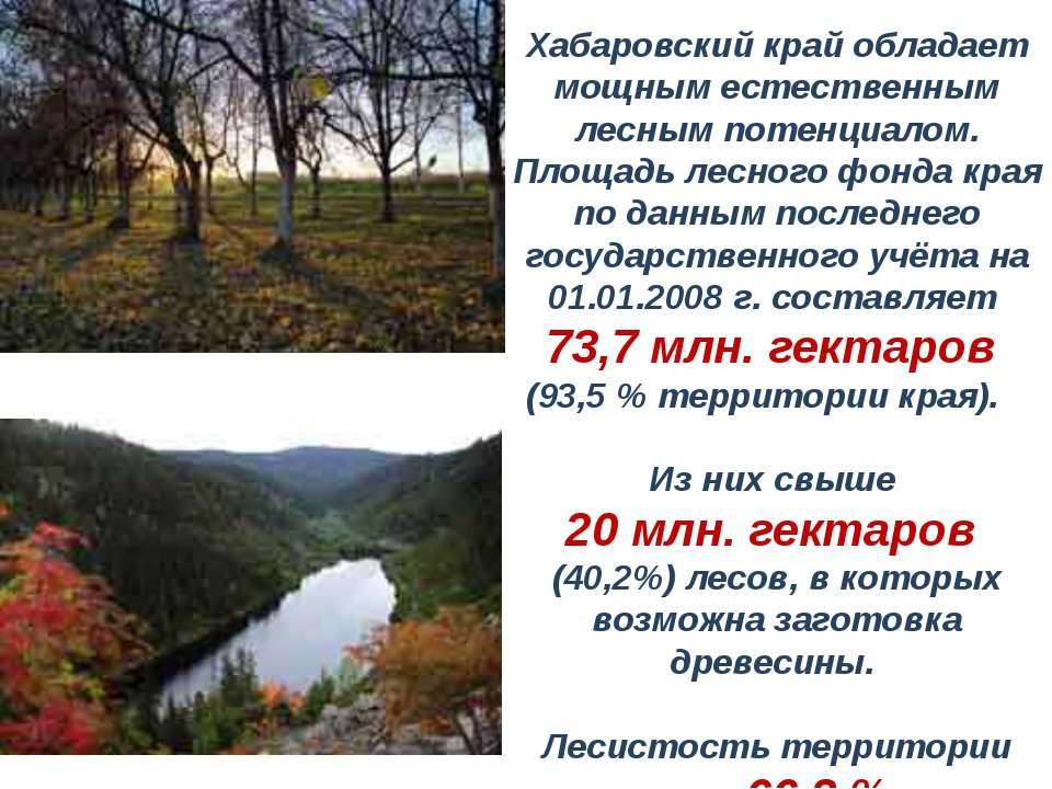 Хабаровский край обладает мощным естественным лесным потенциалом. Площадь лес...