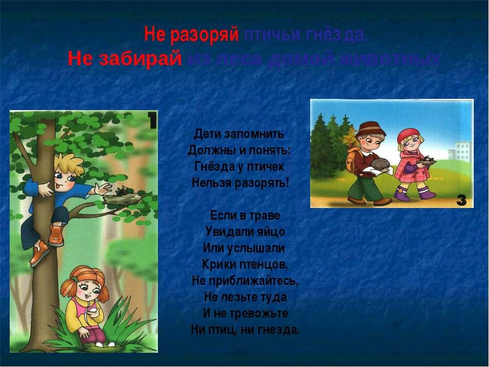 Не разоряй птичьи гнёзда, Не забирай из леса домой животных Дети запомнить До...