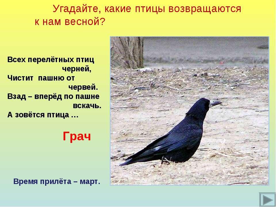 Угадайте, какие птицы возвращаются к нам весной? Всех перелётных птиц черней,...