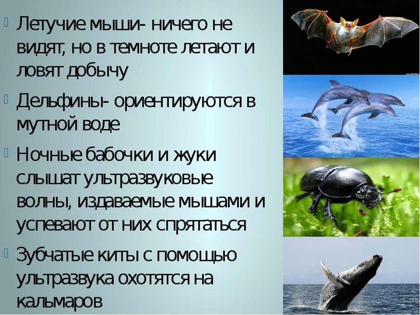Летучие мыши- ничего не видят, но в темноте летают и ловят добычу Дельфины- о...