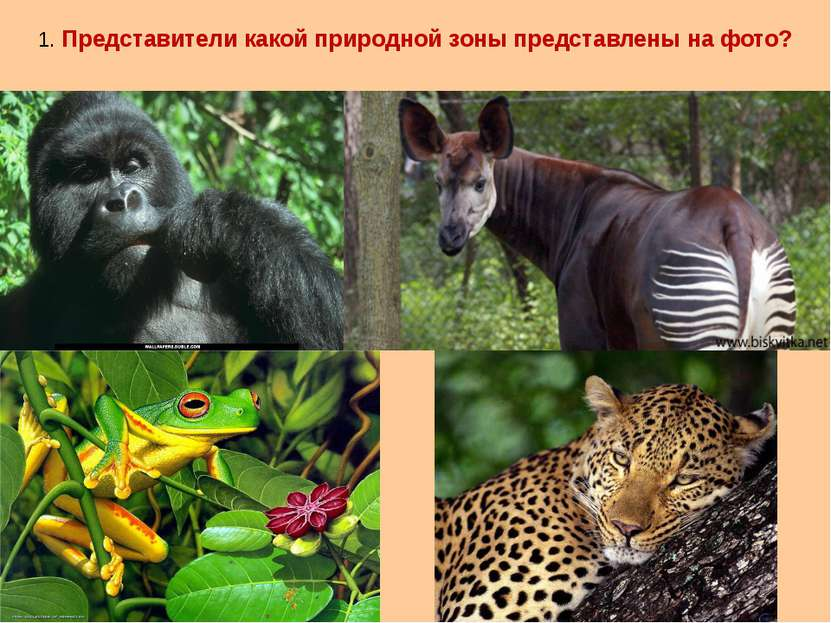 1. Представители какой природной зоны представлены на фото?