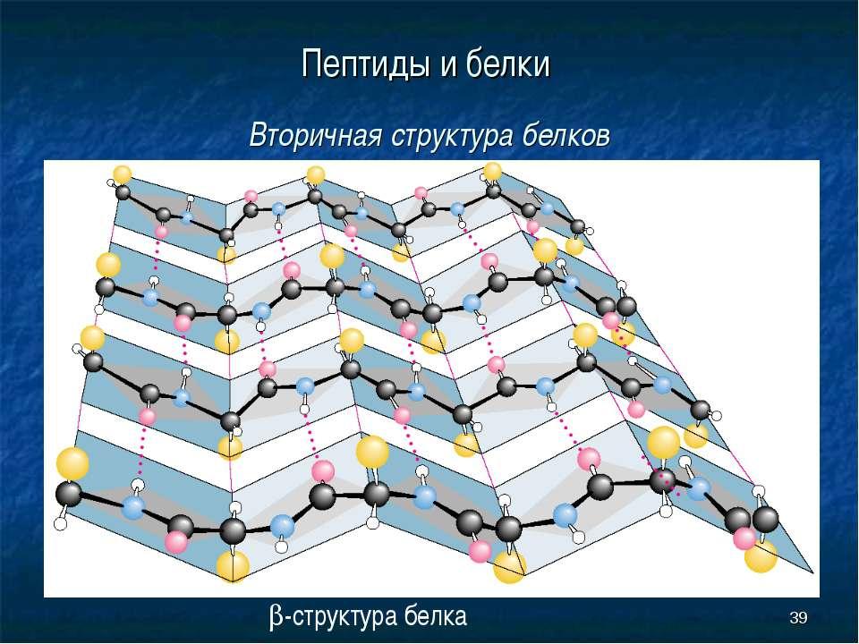 * Пептиды и белки Вторичная структура белков b-структура белка