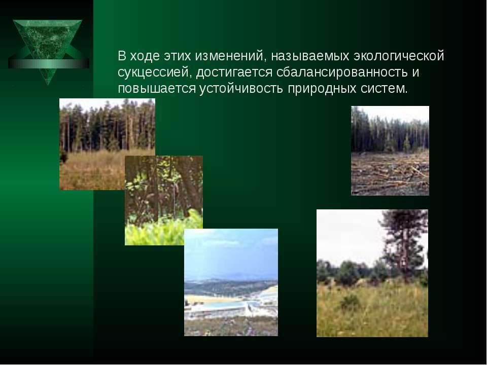 В ходе этих изменений, называемых экологической сукцессией, достигается сбала...