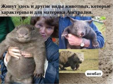 Живут здесь и другие виды животных, которые характерны и для материка Австрал...
