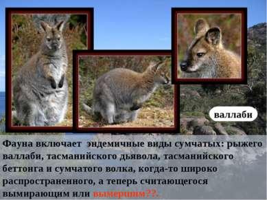 Фауна включает эндемичные виды сумчатых: рыжего валлаби, тасманийского дьявол...
