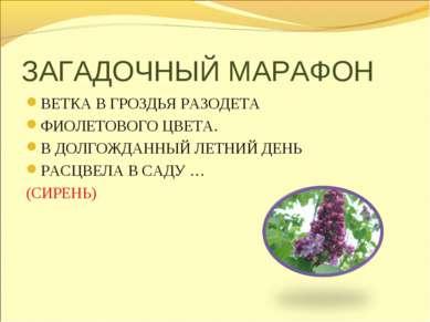 ЗАГАДОЧНЫЙ МАРАФОН ВЕТКА В ГРОЗДЬЯ РАЗОДЕТА ФИОЛЕТОВОГО ЦВЕТА. В ДОЛГОЖДАННЫЙ...