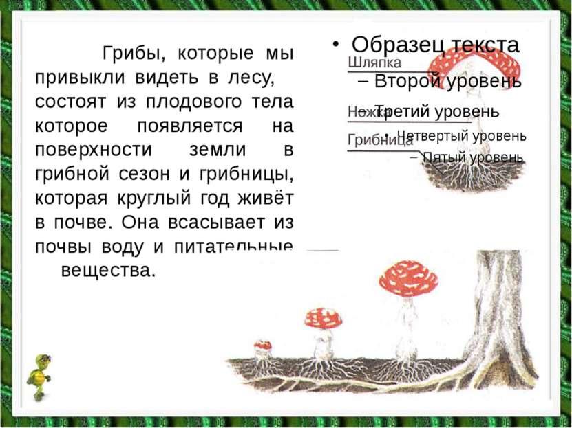 Грибы, которые мы привыкли видеть в лесу, состоят из плодового тела которое п...
