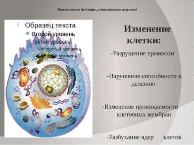 Биологическое действие радиоактивных излучений Изменение клетки: -Разрушение ...
