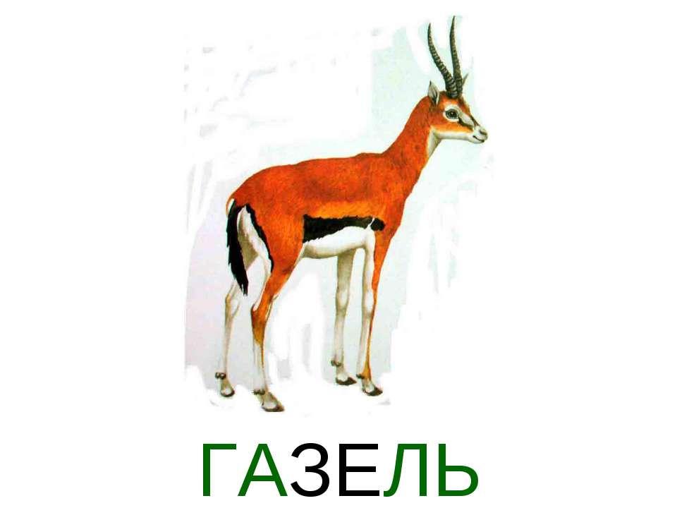 ГАЗЕЛЬ