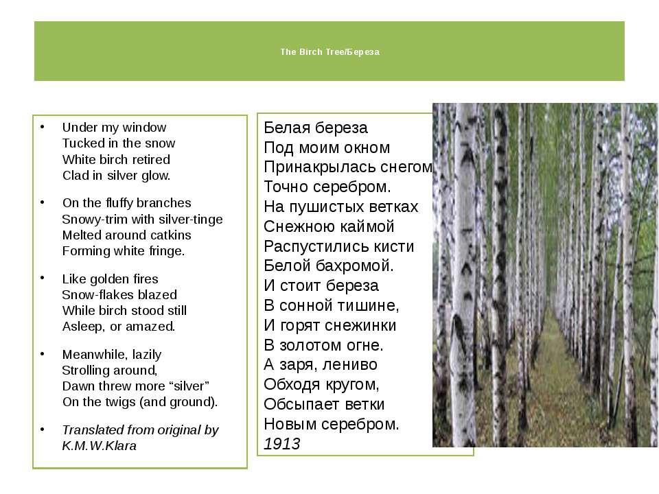 The Birch Tree/Береза Under my window Tucked in the snow White birch retired ...