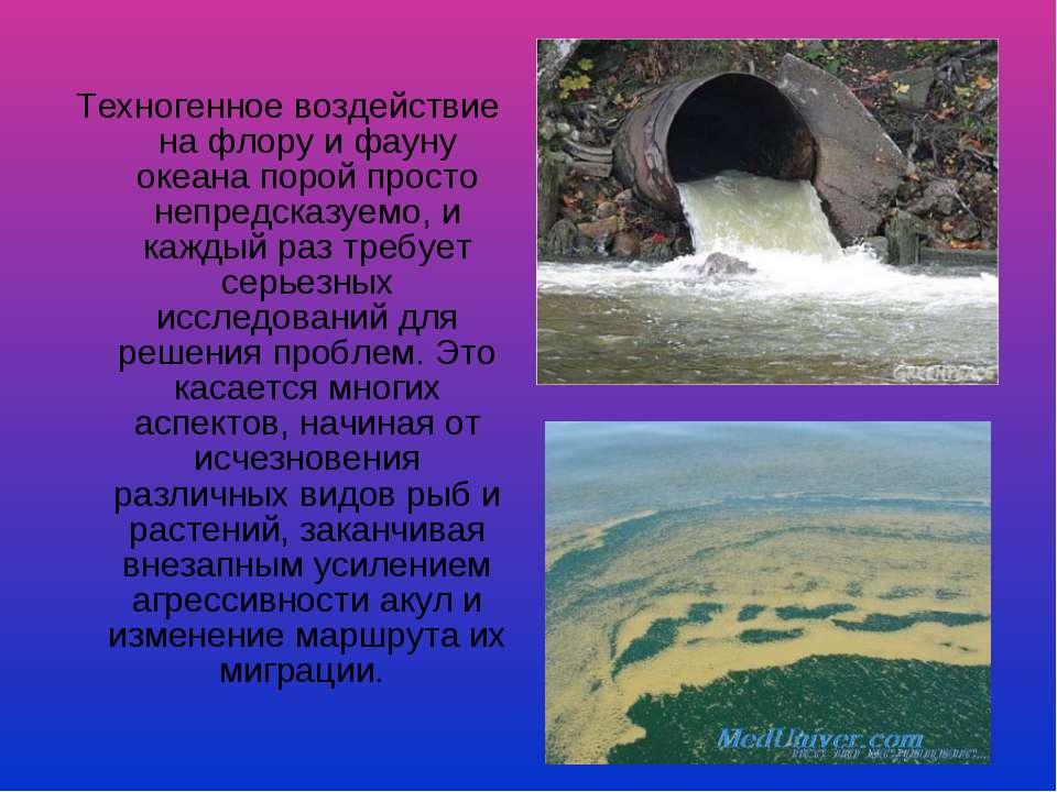 Техногенное воздействие на флору и фауну океана порой просто непредсказуемо, ...