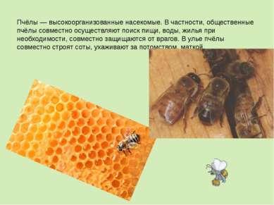 Пчёлы— высокоорганизованные насекомые. В частности, общественные пчёлы совме...