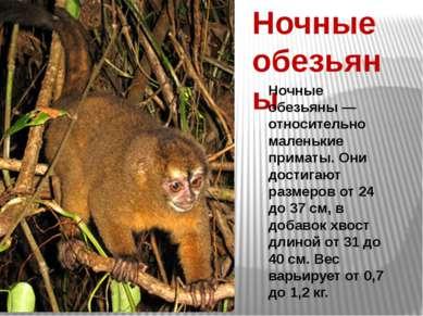 Ночные обезьяны Ночные обезьяны — относительно маленькие приматы. Они достига...