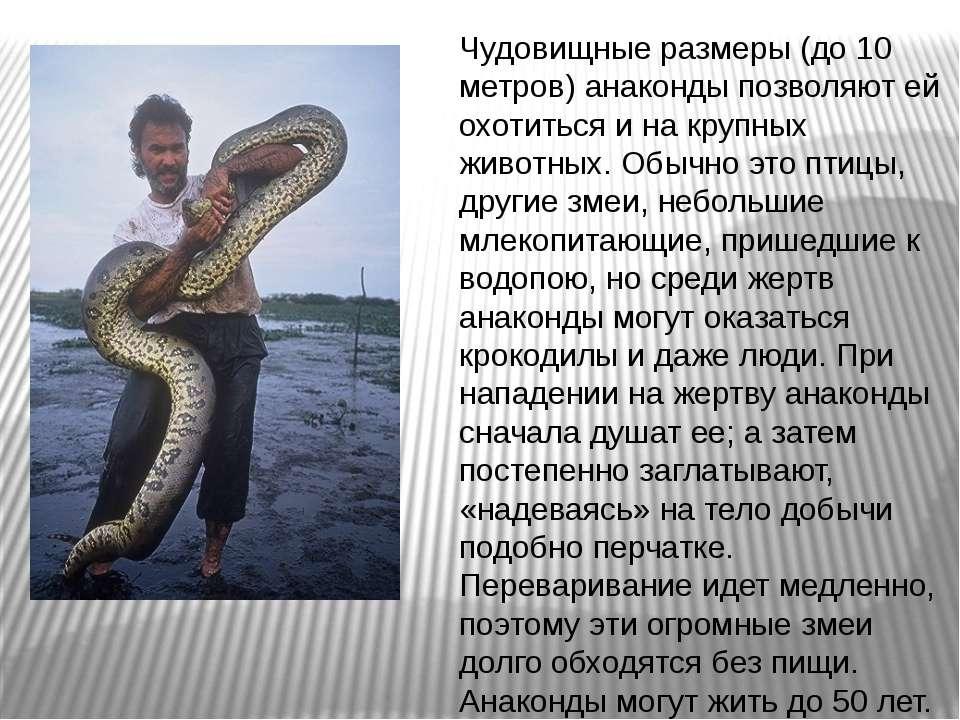 Чудовищные размеры (до 10 метров) анаконды позволяют ей охотиться и на крупны...